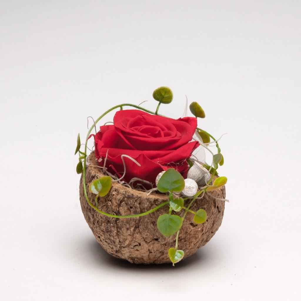 Orico Schote mit haltbarer Infinity-Rose